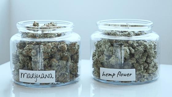 marijuana-vs-cbd-flower-difference