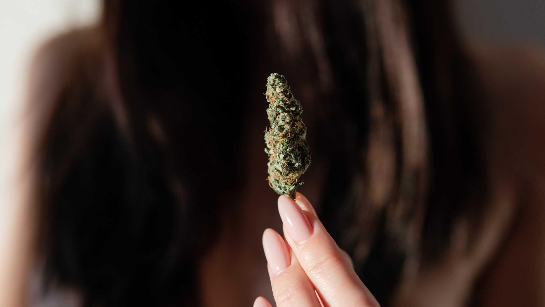 medical-marijuana-plant-in-hands